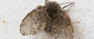 Close up van rioolvlieg